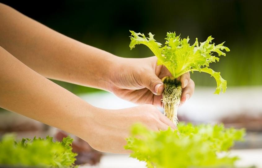 La start-up Swiss Eco Farm se spécialise dans les fermes verticales (vertical farming)